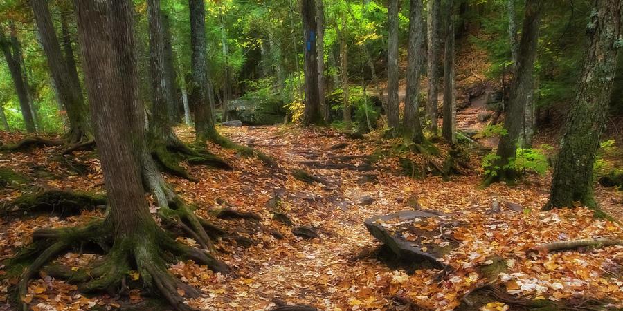 Michigan Photograph - Canyon Falls Trail 1 by Heather Kenward