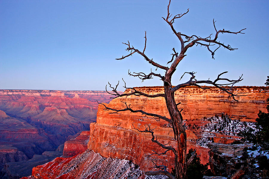 Canyon Tree Photograph