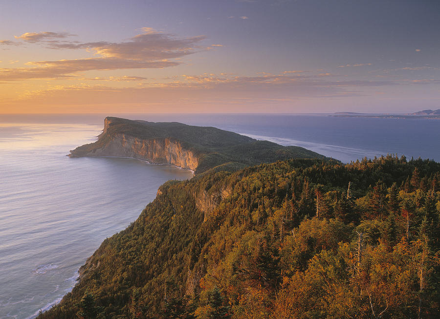 Cap Bon Ami Gaspe Peninsula Forillon Photograph By