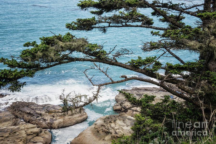 Cape Arago Scenic View Photograph