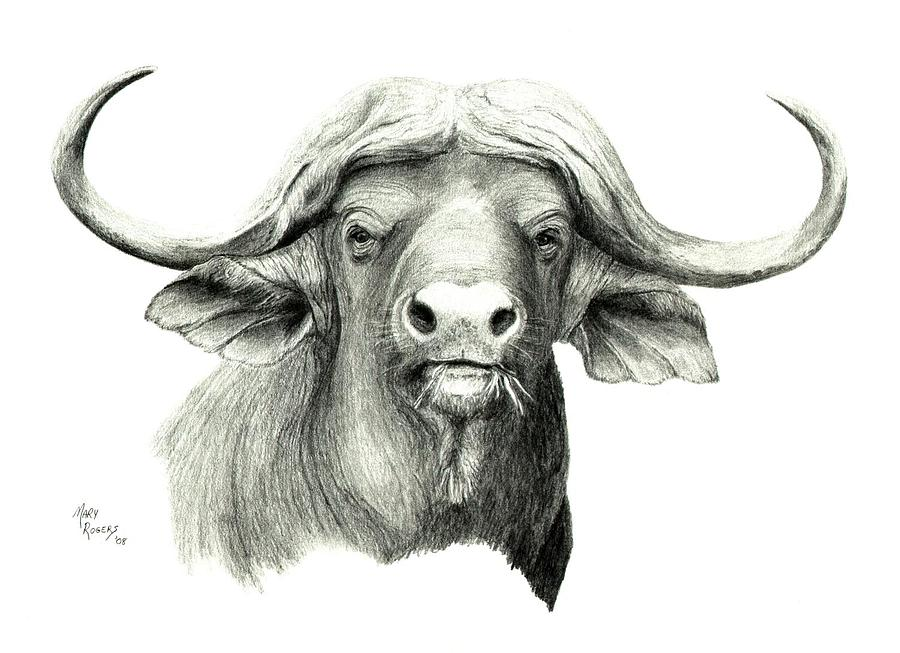 Cape Buffalo Drawing - Cape Buffalo by Mary Rogers