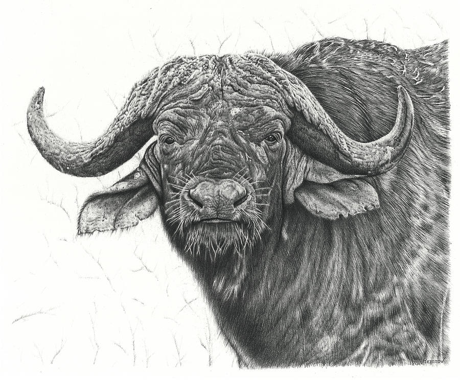 Cape Buffalo by Remrov