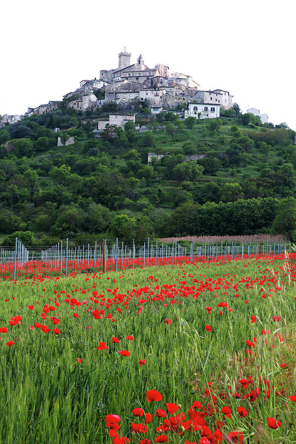 Poppies Photograph - Capestrano And Poppy Fields by Tom  Doherty