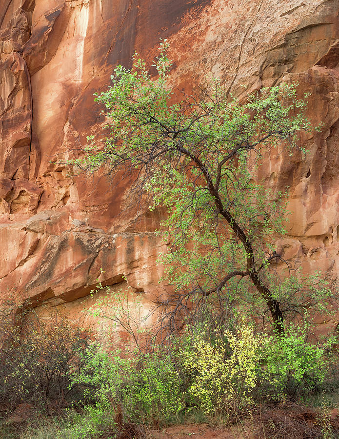 Capitol Reef Photograph - Capitol Gorge by Joseph Smith