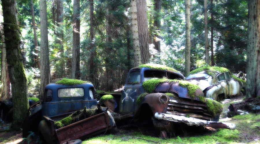 Vintage Cars Photograph - Car Lot In The Forest by Diane Smith