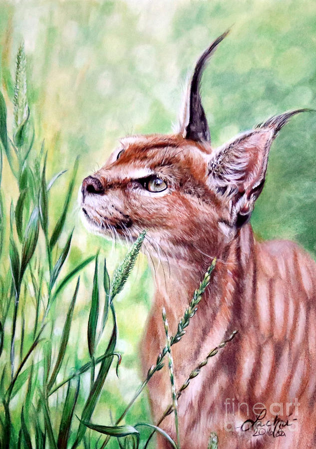 Caracal by Lachri