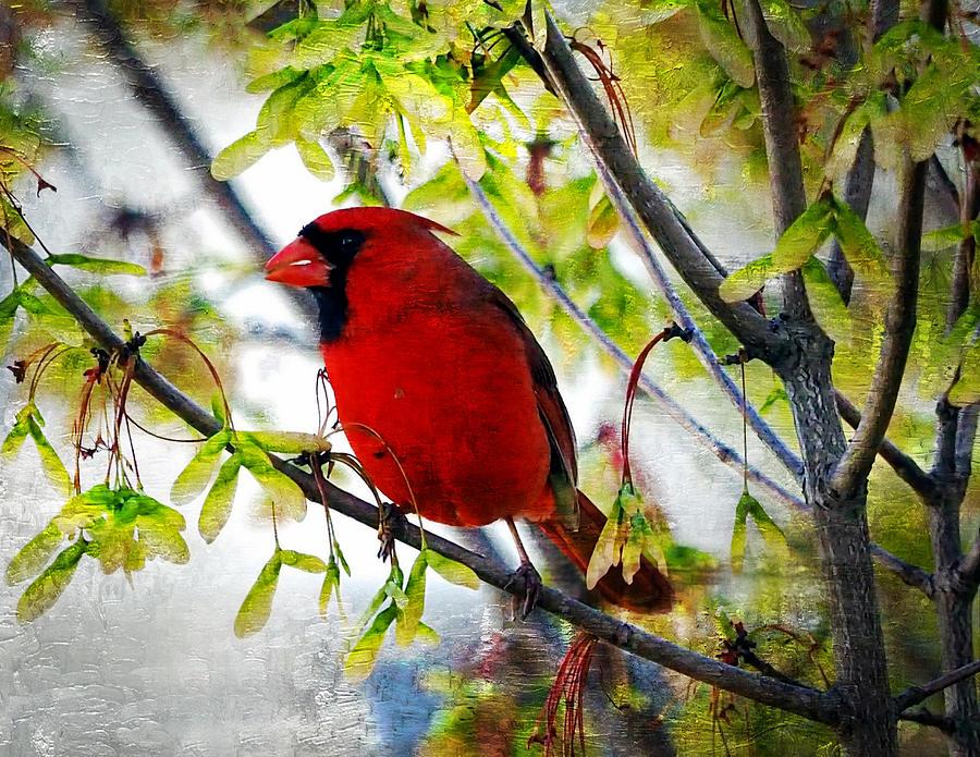 Bird Photograph - Cardinal 1 by Scott Fracasso