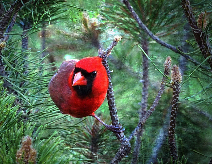 Bird Photograph - Cardinal 2 by Scott Fracasso