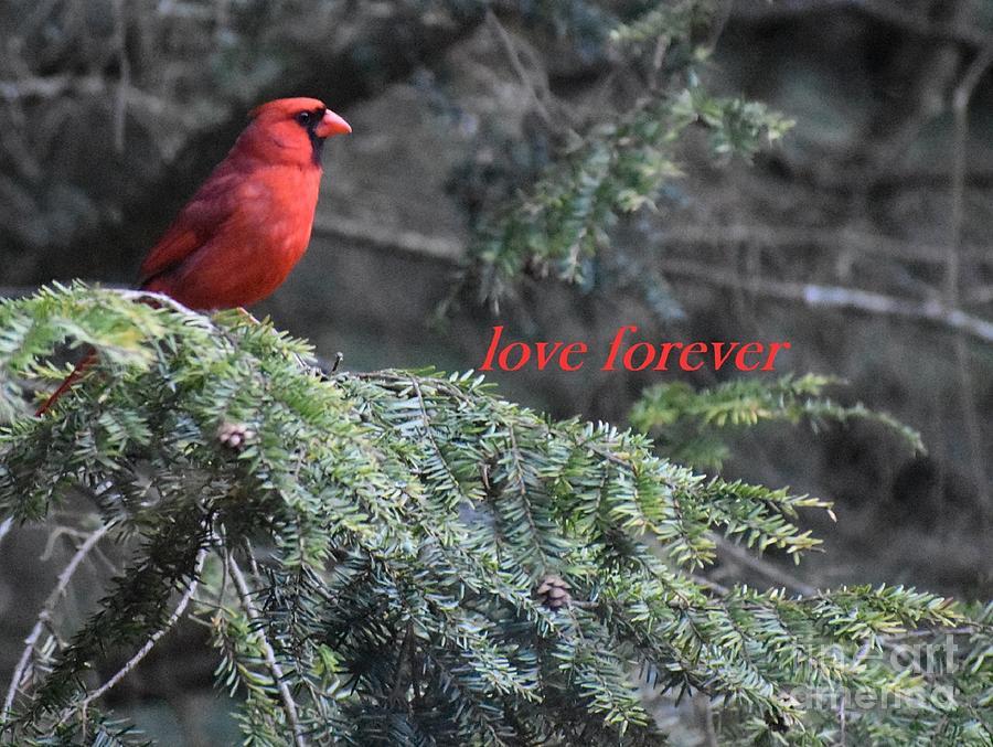 Cardinal Greeting by Christina Verdgeline
