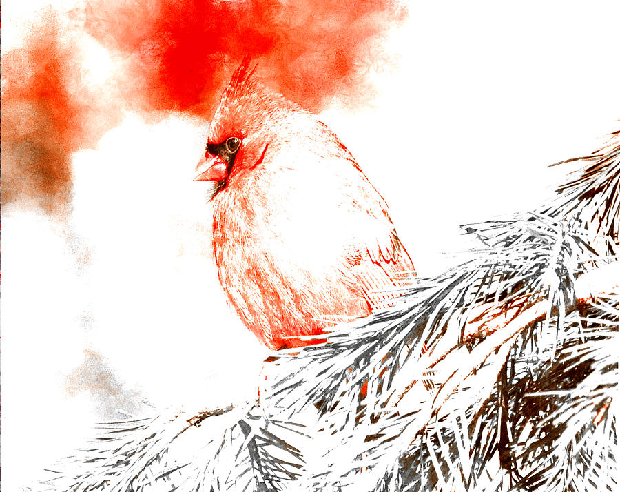 Cardinal Digital Art - Cardinal in Snow by Femina Photo Art By Maggie