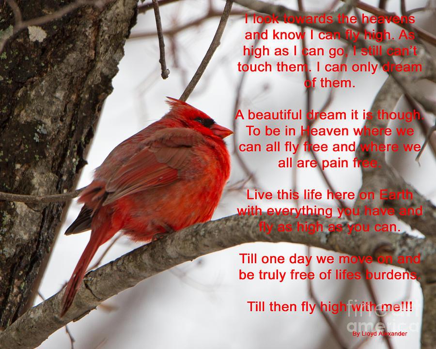 Cardinal Poem Photograph by Lloyd Alexander