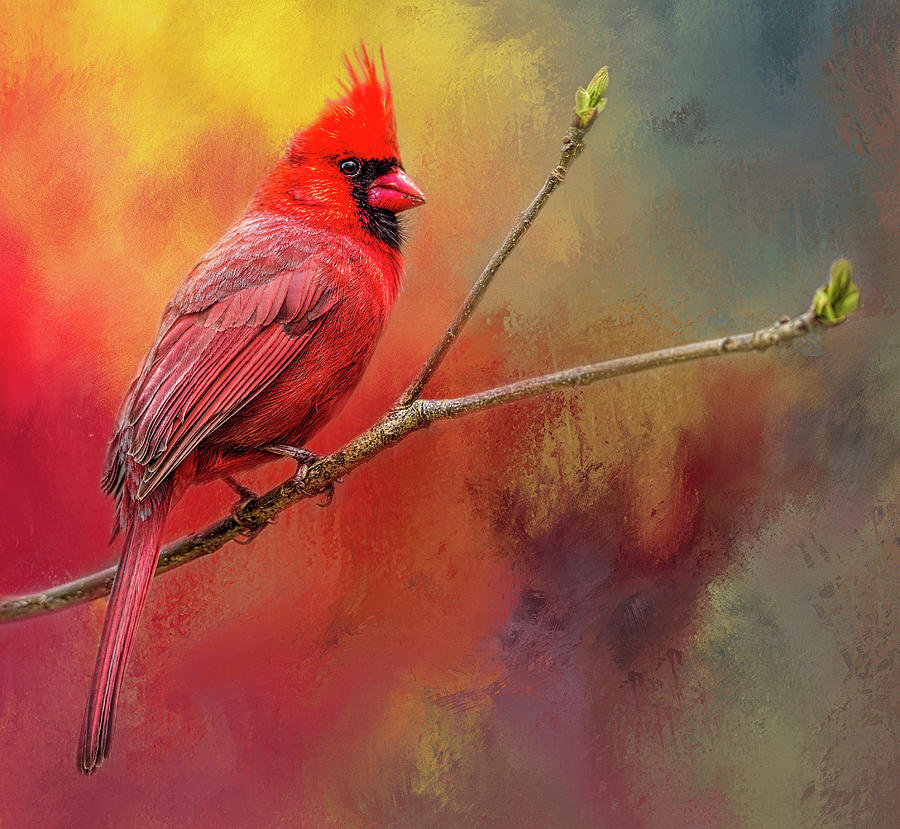 Cardinal Red by Wes Iversen