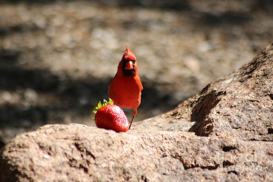 Cardinal Photograph - Cardinal Rule by Mike Parker