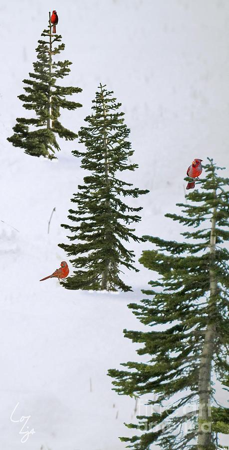 Cardinal Trees Photograph by Lozja Mattas