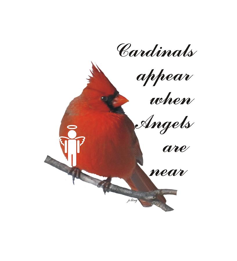 Cardinals And Angels Digital Art by Jacquie King