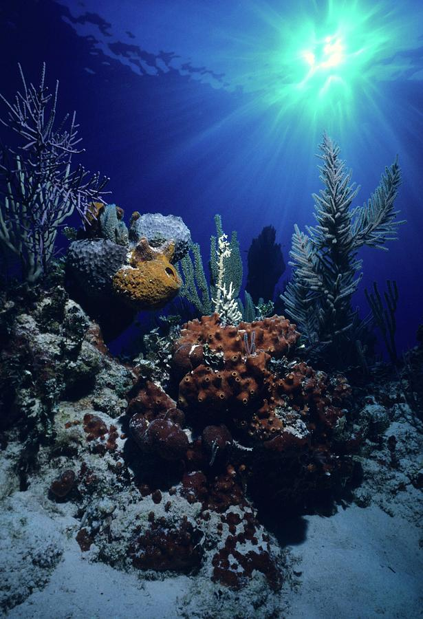 Bahamas Photograph - Caribbean Christmas   by Don Kreuter