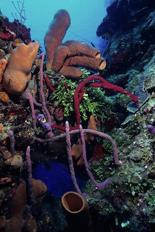 Algae Photograph - Caribbean Kaleidoscope  by Don Kreuter