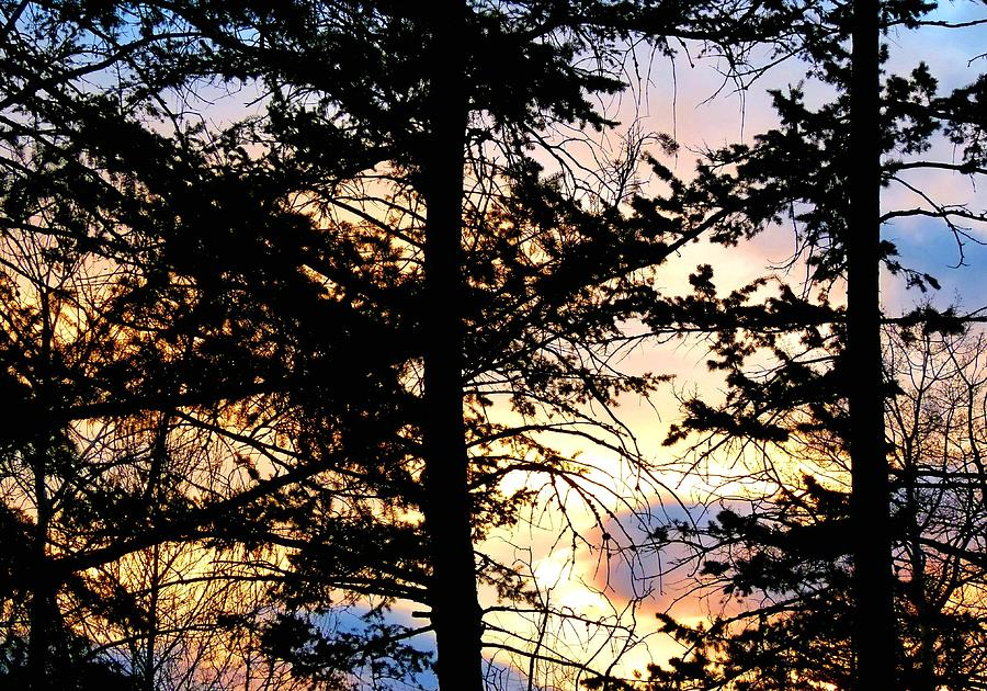 Trees Photograph - Cariboo District Sunset by Will Borden