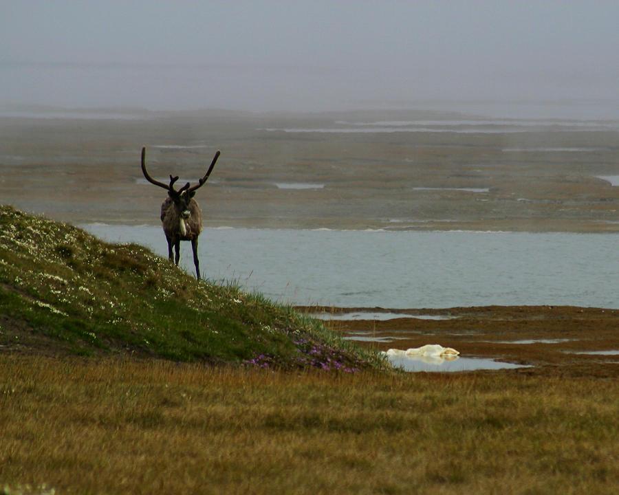 Caribou Photograph - Caribou Fog by Anthony Jones