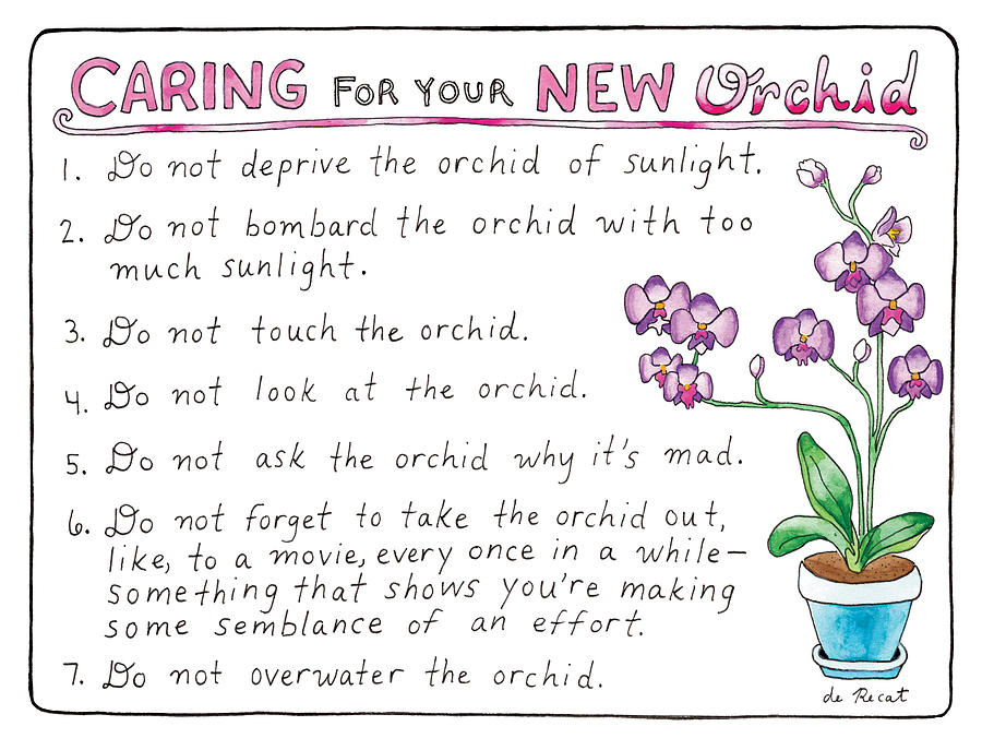 Caring For Your New Orchid Drawing by Olivia de Recat