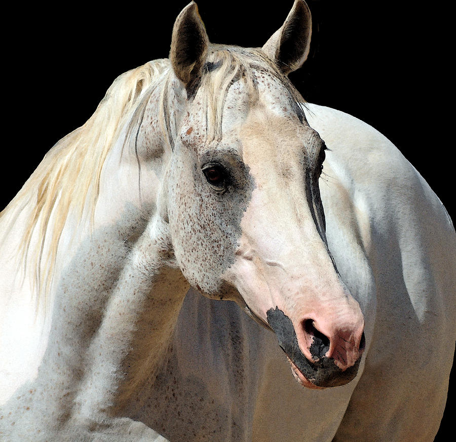 Horse Photograph - Carlyle by J DeVereS