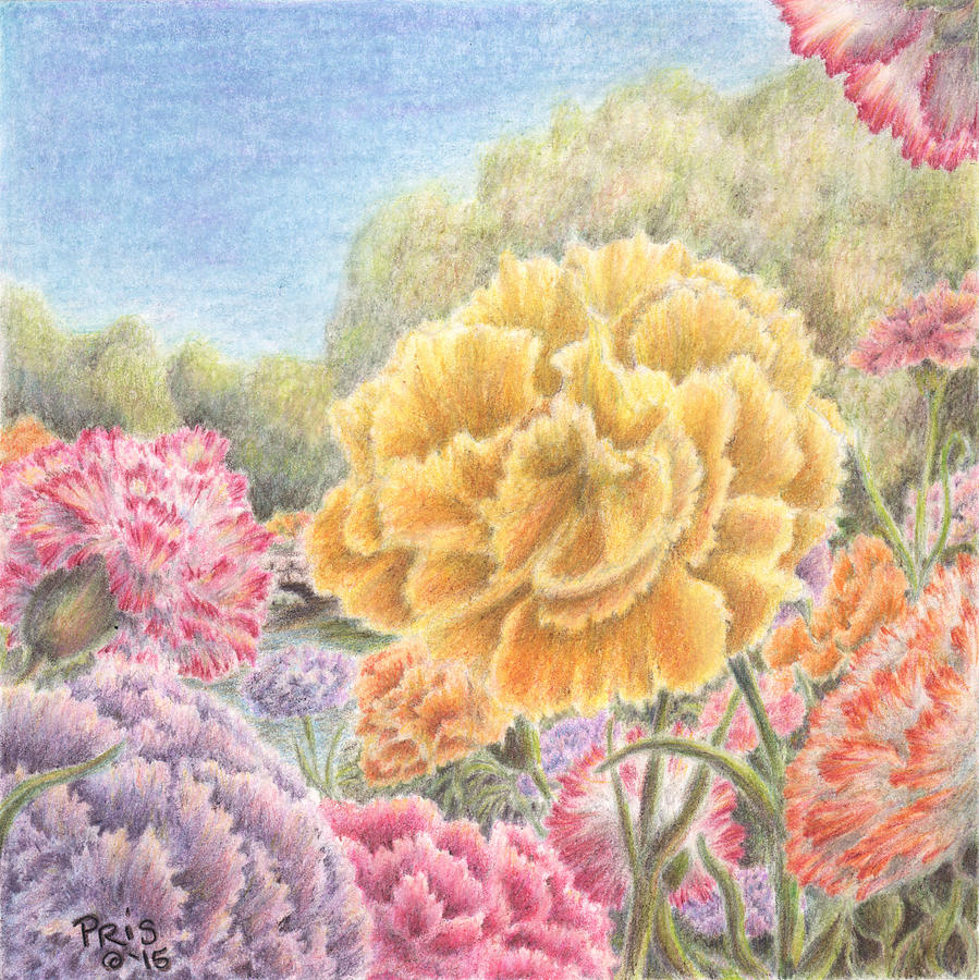 Carnations Galore by Pris Hardy