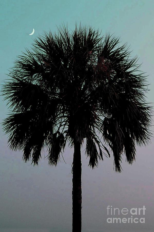 Palm Tree Photograph - Carolina Moon by Melanie Snipes