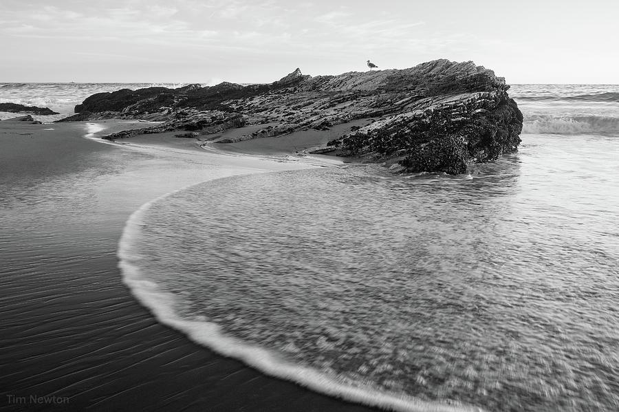 Seaside Photograph - Carpinteria Seagull by Tim Newton