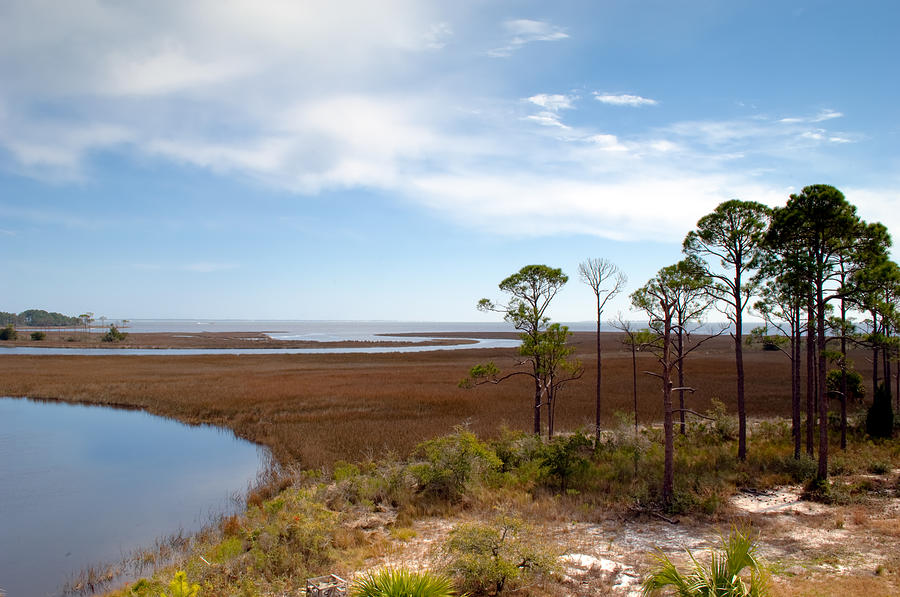 Landscape Photograph - Carrabelle Salt Marshes by Rich Leighton