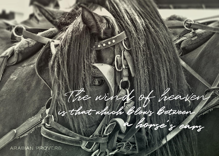 Carriage Horse Quote by Dressage Design