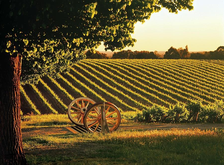 Horizontal Photograph - Cart Wheels At Barossa Valley Vineyard, South Australia by Peter Walton Photography