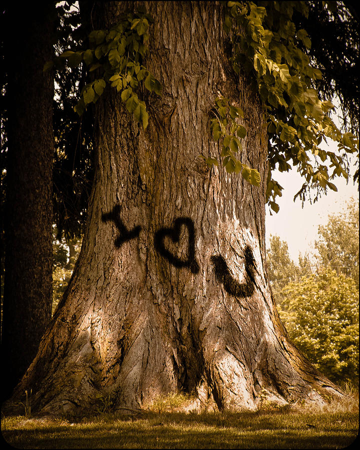 Tree Photograph - Carve I Love You In That Big White Oak by Trish Tritz