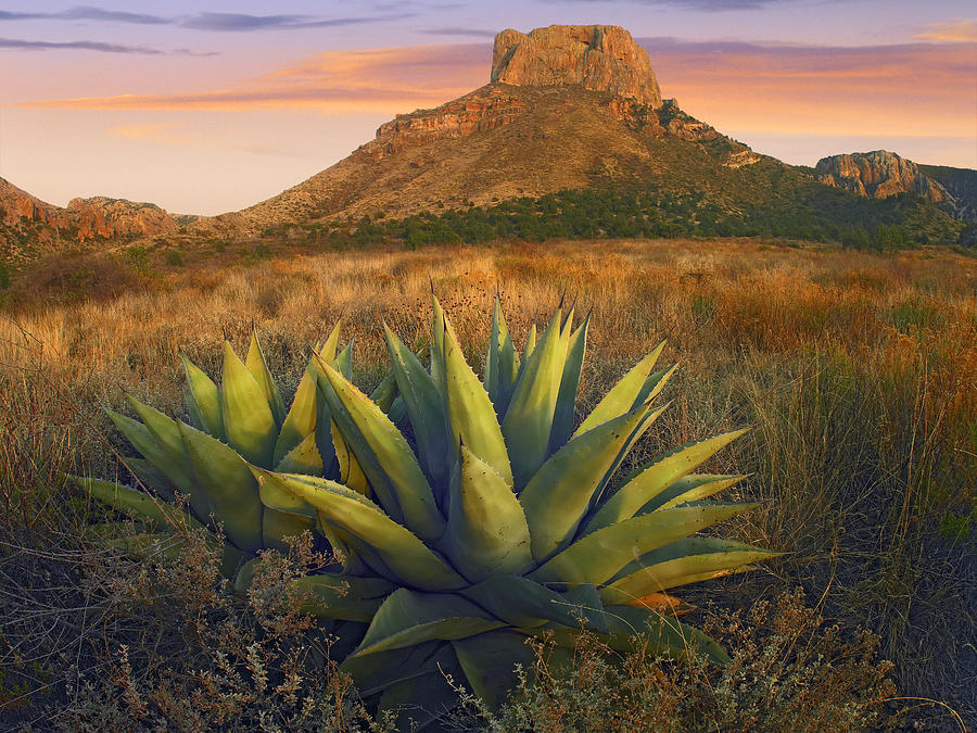 Casa Grande Butte With Agave Photograph by Tim Fitzharris