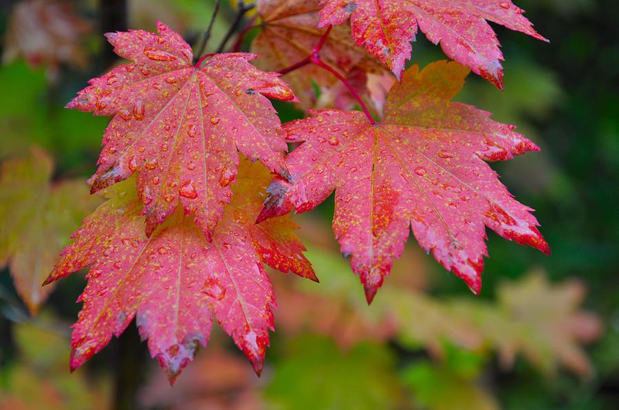 Autumn Photograph - Cascade Autumn Leafs 5 by Noah Cole