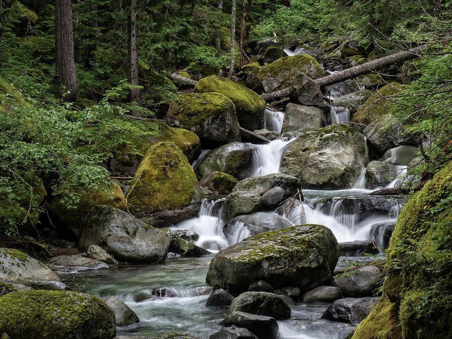 Cascade in the Rainforest by Gary Karlsen