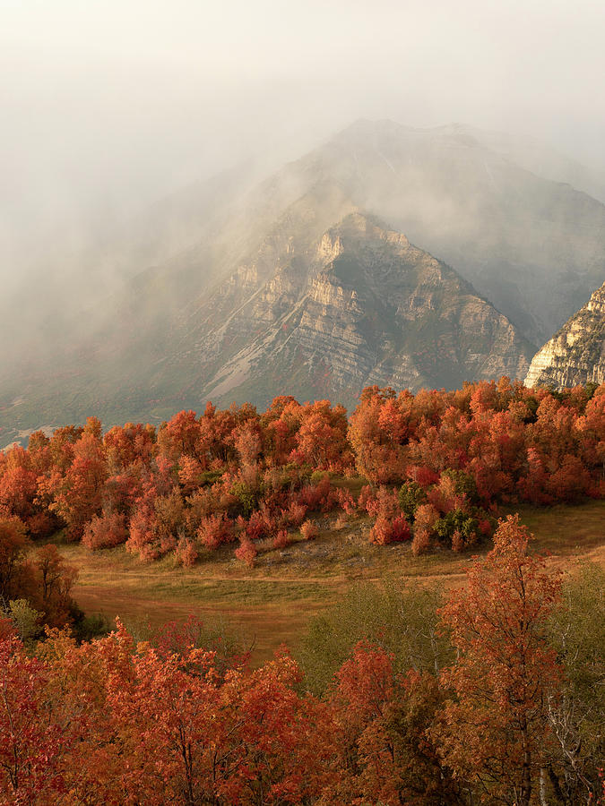 Cascading Fall by Emily Dickey