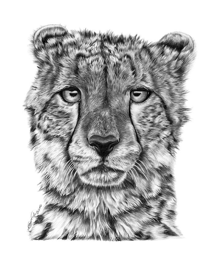 Cassandra the Cheetah by Abbey Noelle