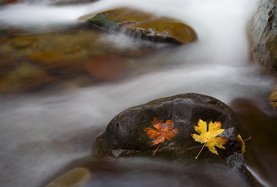 Leaves Photograph - Castaways by Mike  Dawson