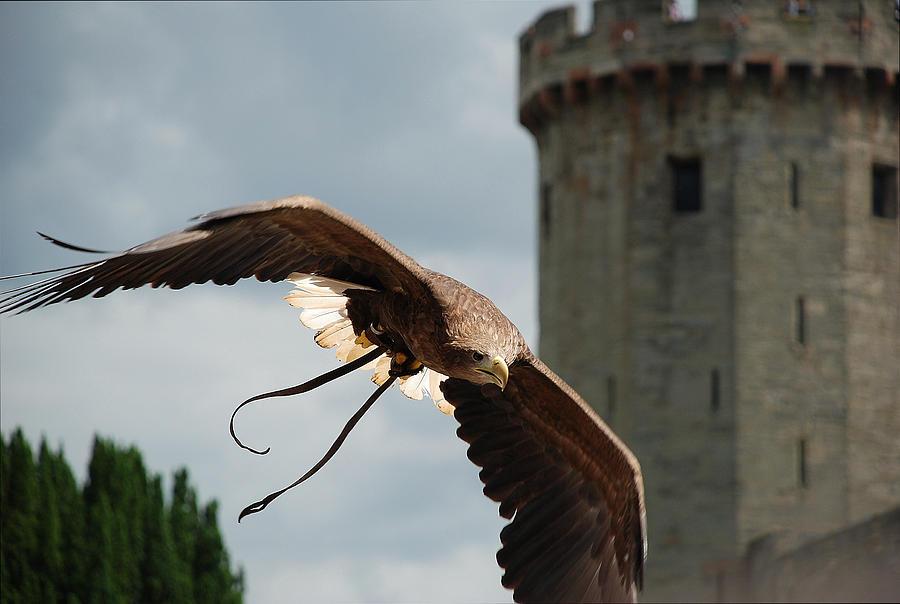 Castle And Eagle Photograph by Irum Iftikhar
