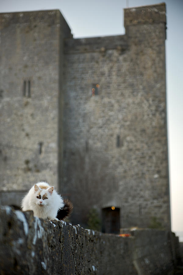 Castle Cat by Lawrence Boothby