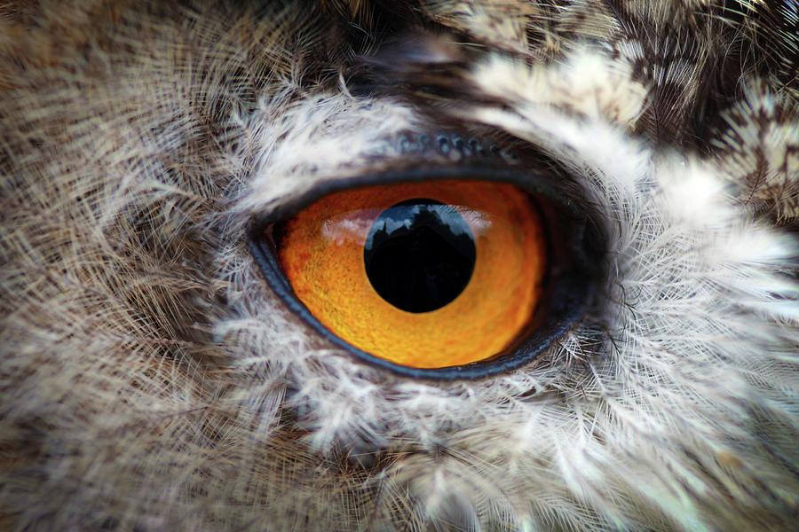 Owl Photograph - Castle In The Owls Eye by Dan Pearce