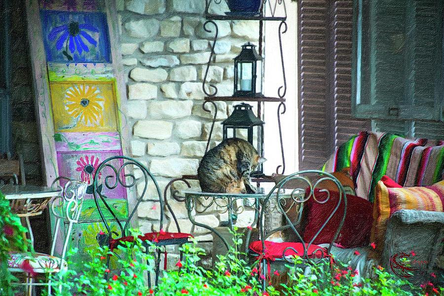 Cat Photograph - Casual cat by Roy Nierdieck