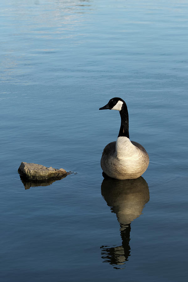 Casual Goose by Shoeless Wonder