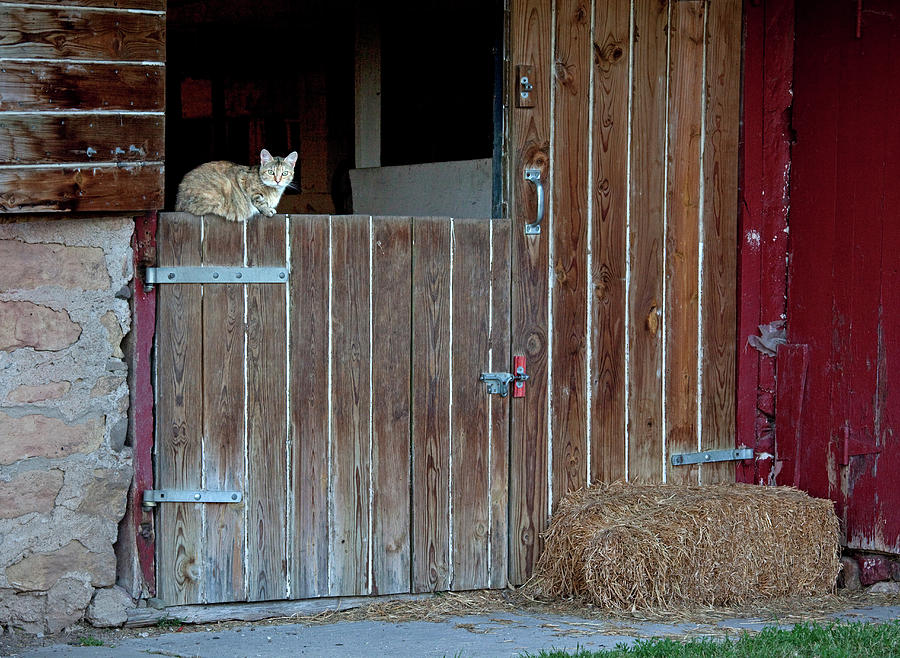 Cats Photograph - Cat And Barn by George Sanquist