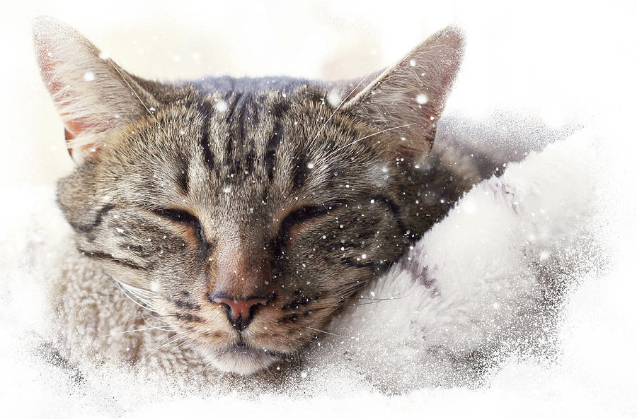 Cat and snow by Helga Novelli