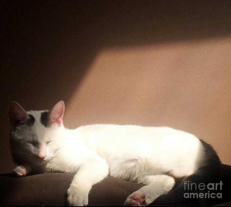 Cat by Brianna Kelly