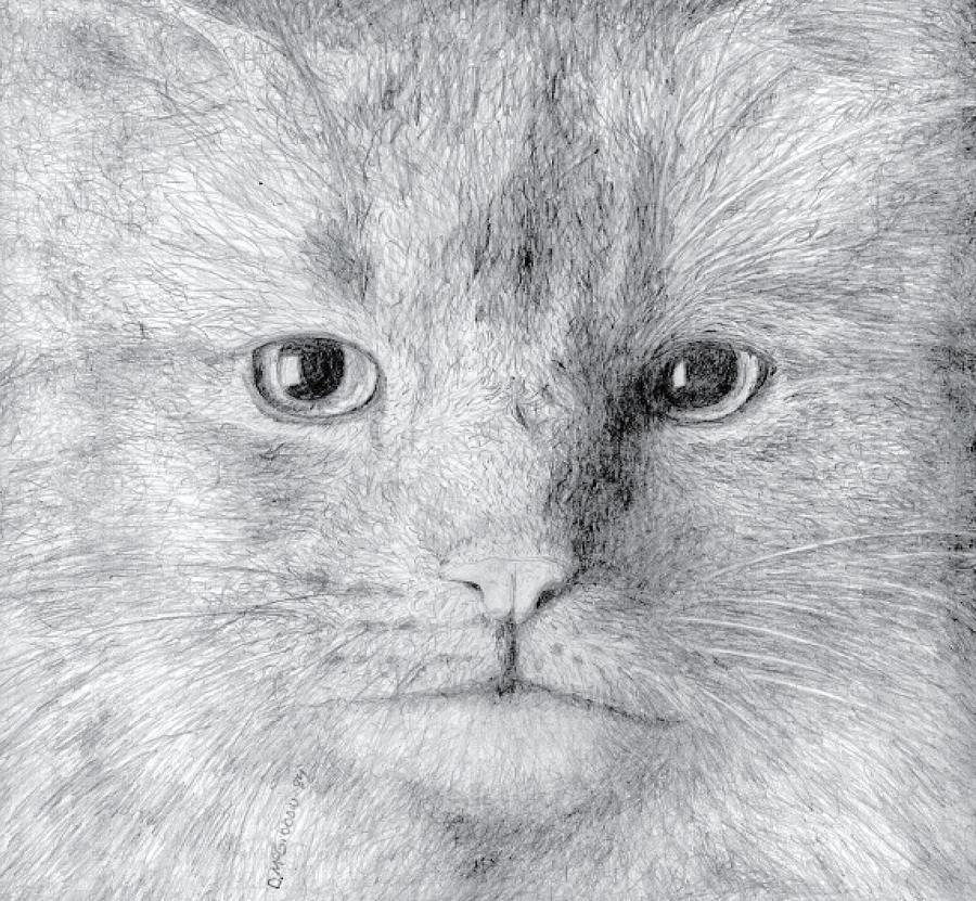Cat Drawing - Cat by Dan McGibbon