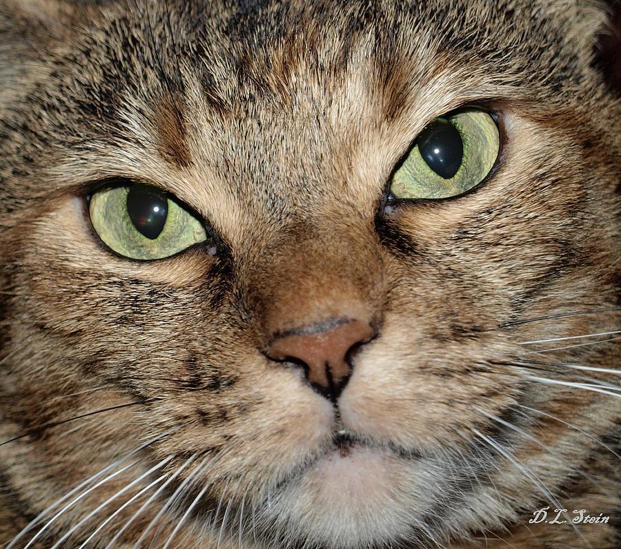 Cat Photograph - Cat by Dennis Stein