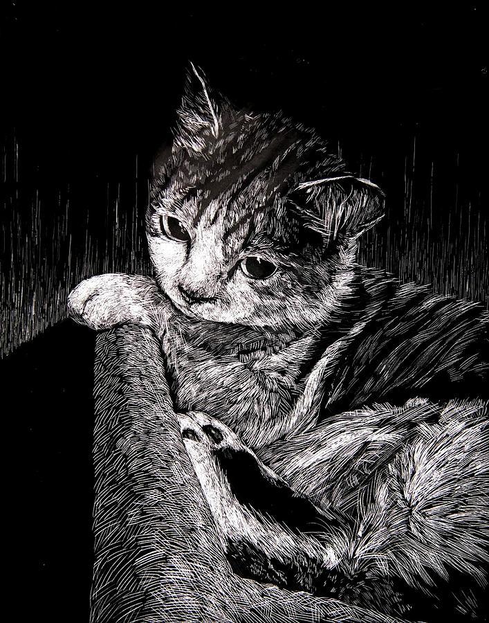 Scratchboard Drawing - Cat by Ellan Suder