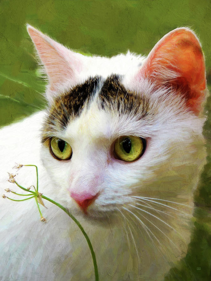 Green Eyes Photograph - Cat Enjoying The Garden by Menega Sabidussi